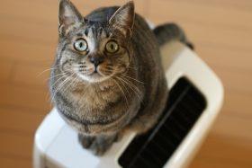 アーキホームライフ 空気清浄機イメージ